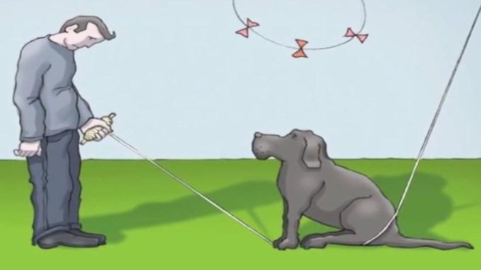 الكلب الأسود و علاقته بالاكتئاب